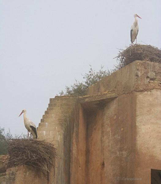 Doñana, cicogne su muri