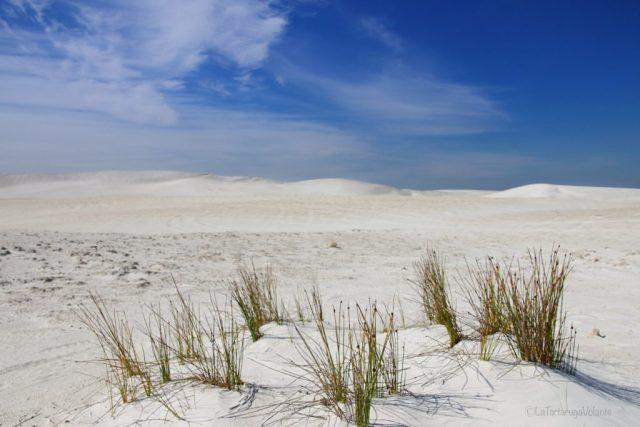 deserto dei pinnacoli, dune ed erba