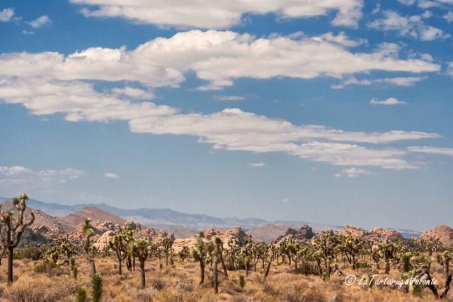 California, Joshua Tree paesaggio