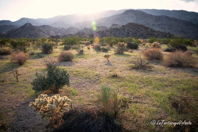 California, Joshua Tree