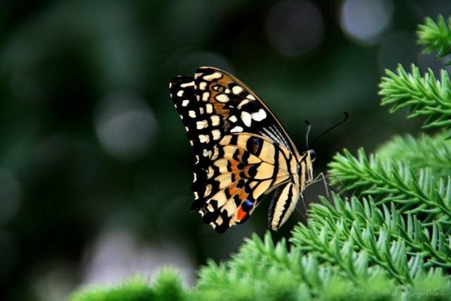 farfalla, la mia casa