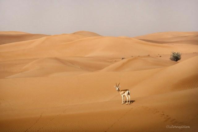 Dubai, deserto arancione e impala