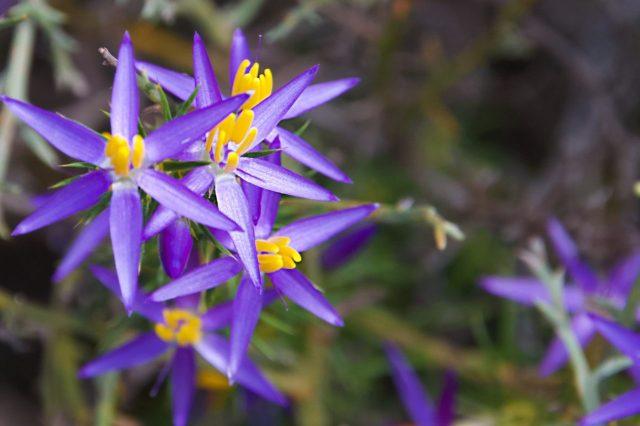 I miei viaggi con i fiori lilla