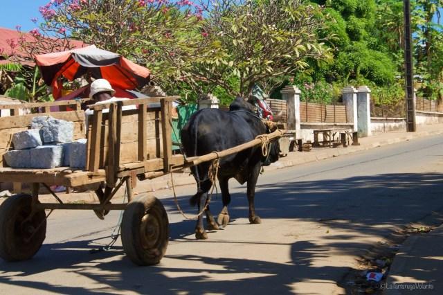 Viaggio in Madagascar, mezzo di trasporto tipico