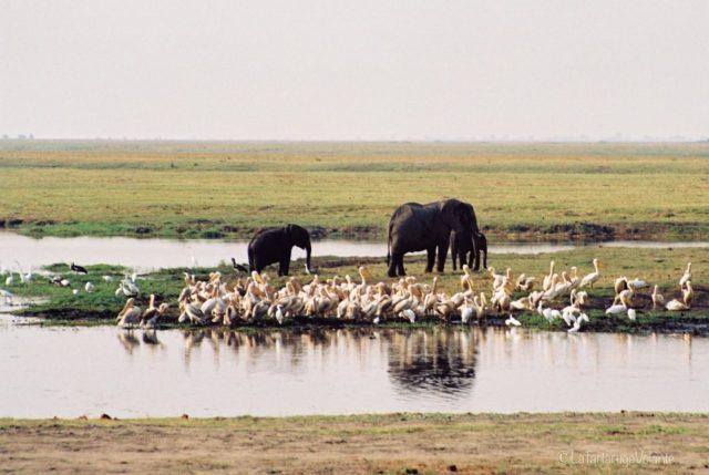 Viaggio in Botswana, elefanti nel Delta dell'Okavango