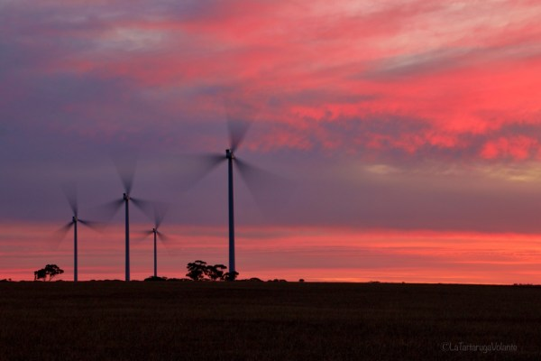 merredin wind farm come palme