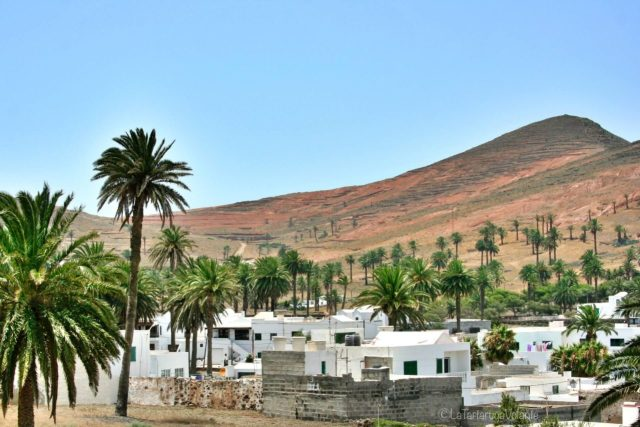Lanzarote, il paese delle palme