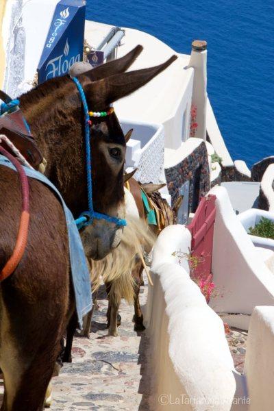 Santorini e gli asini