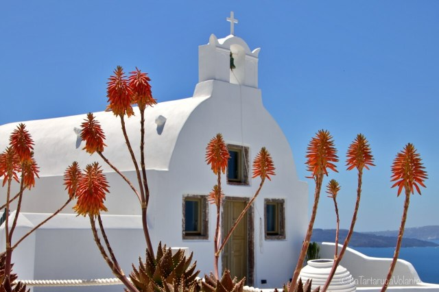 Chiesa a Fira e i fiori arancioni