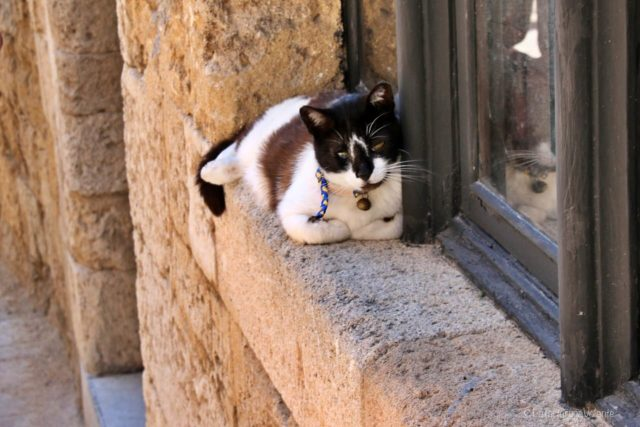 gatto a Rodi