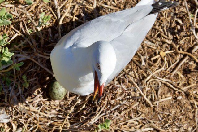 il gabbiano e il suo uovo