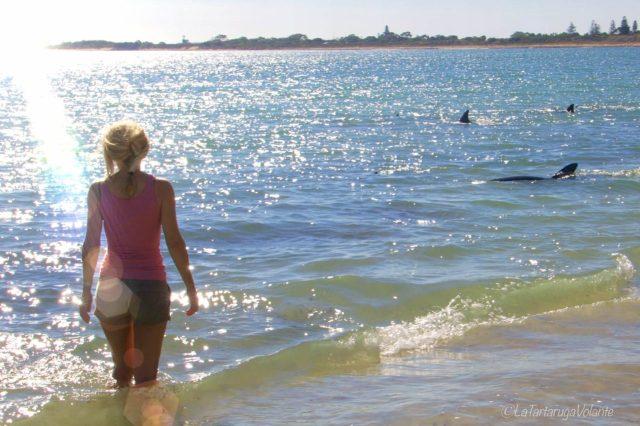 io e i delfini