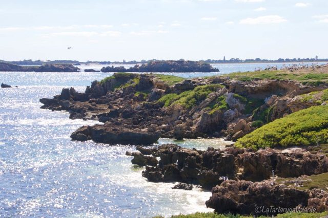 l'isola di penguin island, paradiso degli uccelli