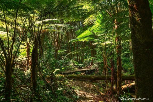 foresta pluviale del queensland