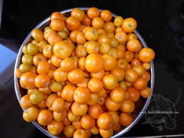 LB-Food-Kumquats-Lumix-P1000043_10241