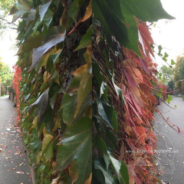Herbstlaub gespiegelt