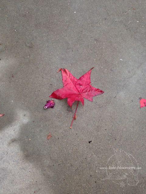 LB red leaf on floor