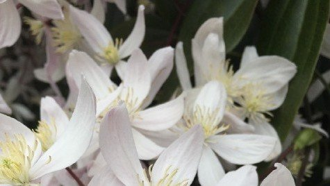 on catching spring and fragranced blossoms