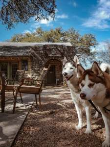 Dog-friendly Coffee Shop in Old Town Helotes Texas