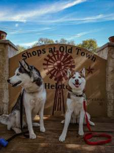 Old Town Helotes Texas Dog-Friendly Town