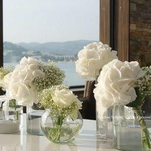 Hortensia Hydranga Viburnum Ou Boule De Neige L