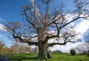 arbre-en-hiver