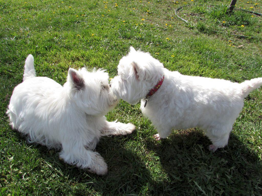 Summer Dog Tips