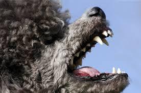 poodle attack ssl 3.0 exploit