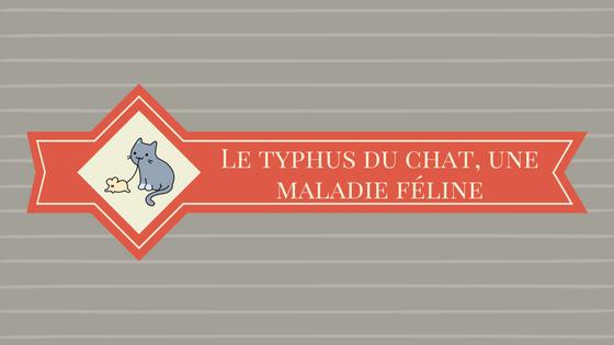 Le typhus du chat, une maladie féline