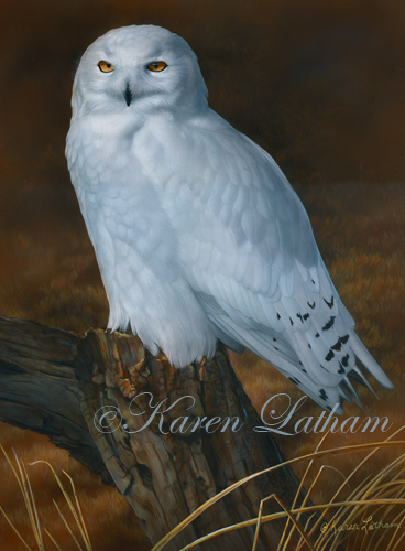 Ghostly Sentinel - Snowy Owl by Karen Latham 2014