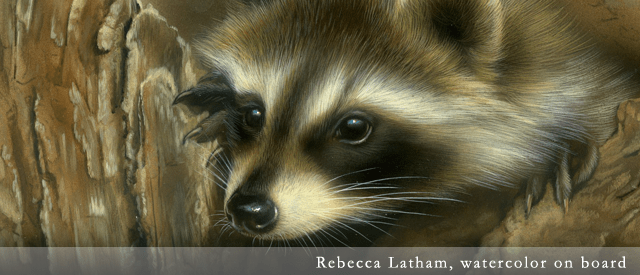 Raccoon, watercolor painting by Rebecca Latham