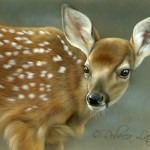 Curious-Fawn Portrait, watercolor on board, ©Rebecca Latham