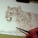 "cougar work in progress, 5"" x 7"", sepia watercolor on board, ©Rebecca Latham"