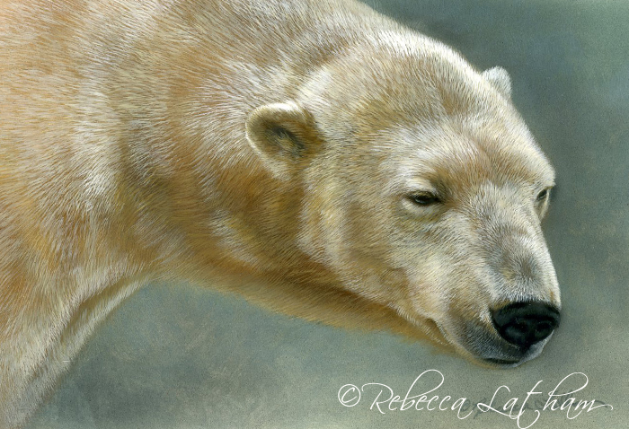 "Polar bear painting, 5"" x 7"", watercolor on board, ©Rebecca Latham"