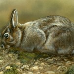 "Nibbling - Rabbit, 5""x7"", watercolor on board, ©Rebecca Latham"