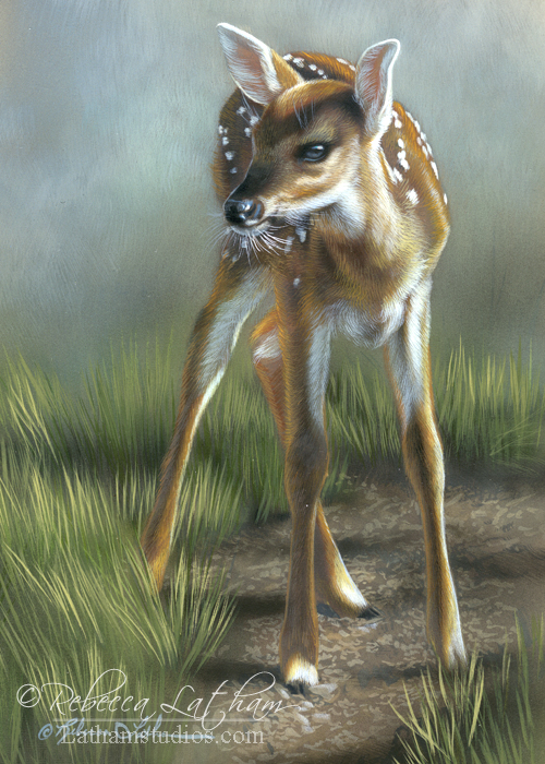 Fawn, 5in x 7in, opaque and transparent watercolor with sterling silver and 24kt gold on board, ©Rebecca Latham