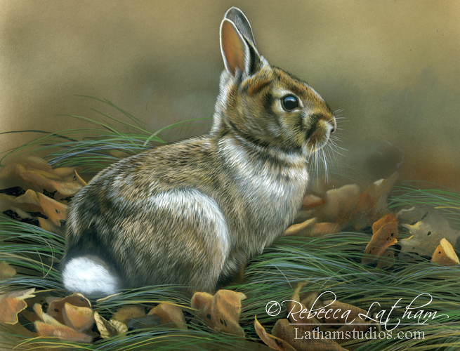rabbit, 9in x 12in, opaque and transparent watercolor with sterling silver on board, ©Rebecca Latham