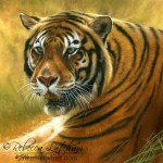 Tiger, 6in x 6in, opaque and transparent watercolor with sterling silver and 24kt gold on board, ©Rebecca Latham