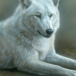 Wolf, 5in x 7in, opaque and transparent watercolor with sterling silver and 24kt gold on board, ©Rebecca Latham