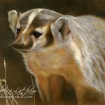 Pause - American Badger, Opaque & transparent watercolor with sterling silver on board, 8in x 10in, ©Rebecca Latham