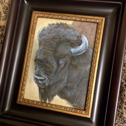 Framed Bison