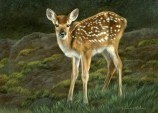 """Whitetail Fawn, 5"""" x 7"""", watercolor on board, ©Rebecca Latham - The Snowgoose Gallery The Art of the Miniature XXIII"""