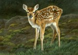 "Whitetail Fawn, 5"" x 7"", watercolor on board, ©Rebecca Latham - The Snowgoose Gallery The Art of the Miniature XXIII"