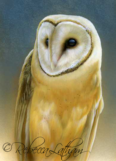 Blue and Gold - Barn Owl I,  Opaque & transparent watercolor with sterling silver and 24kt gold on board, 5in x 7in, ©Rebecca Latham