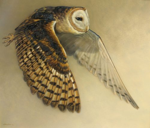 Silent Flight - Barn Owl, 20x24in, watercolor on board with sterling silver