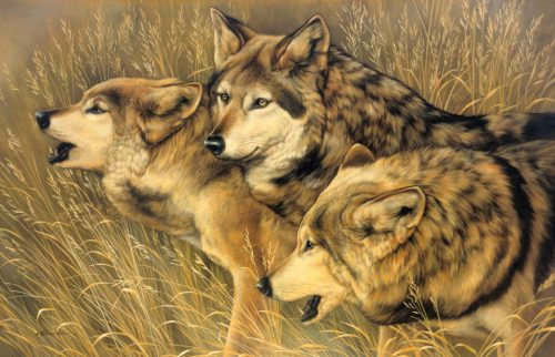 Three Companions - Wolves, 20x30in, watercolor on board with sterling silver