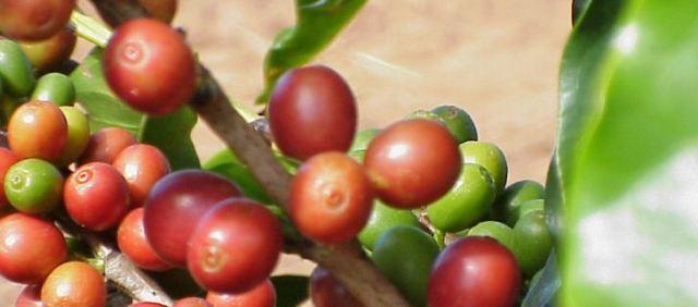 Kolumbien wurde zum weltweit größten Produzenten von Arabica-Kaffee