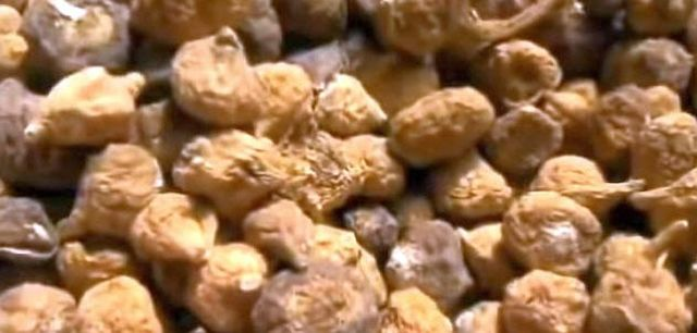 Maca gilt als Superfood der südamerikanischen Inka