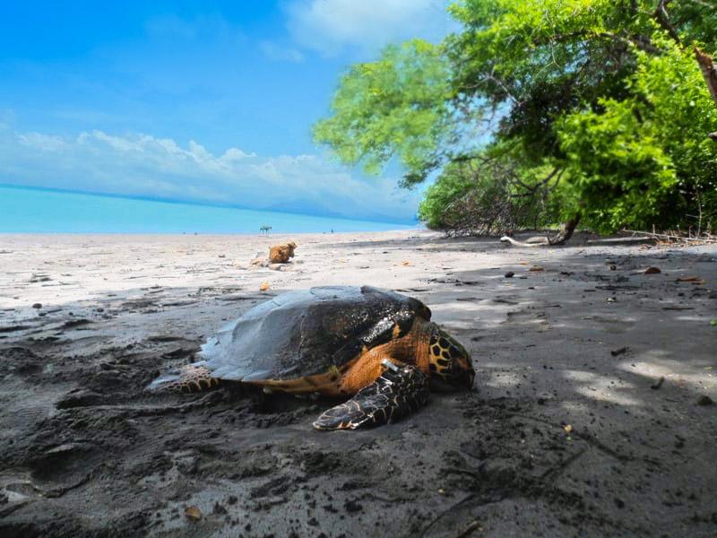 La Isla La Pirraya – A Salvadoran Paradise Embraces Development and Welcomes Tourism