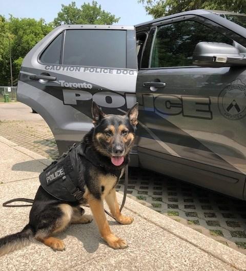 Conoce a Jango, el canino que ayudó a atrapar a los responsables de este robo en Toronto